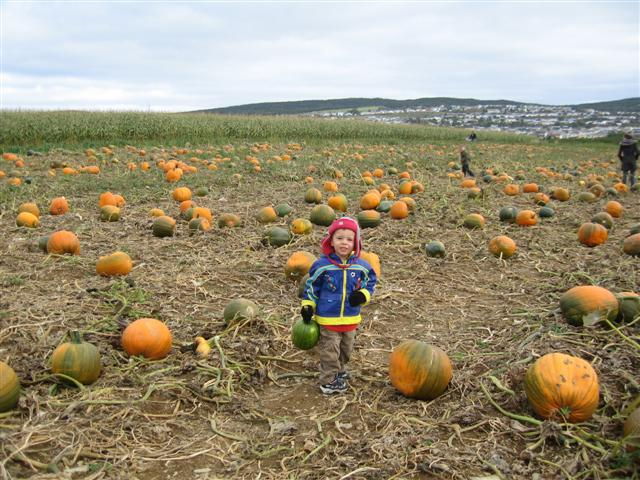 Nicholas and the Pumpkins!